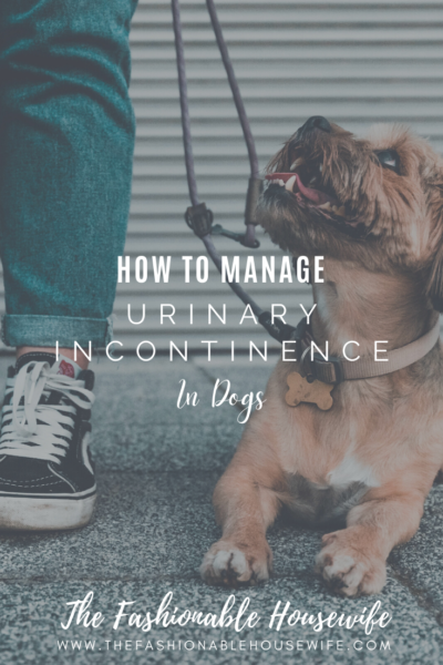 How To Manage Urinary Incontinence in Dogs